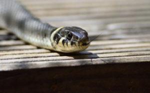 夢占い ヘビ