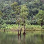 ジャングルの夢