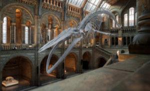 博物館の夢